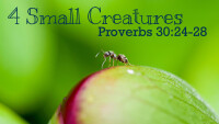 Four Small Creatures Sermon